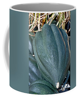 Whole Acorn Squash Art Prints Coffee Mug by Valerie Garner