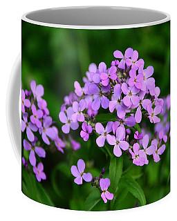 Wild Phlox Coffee Mug by Debra Martz
