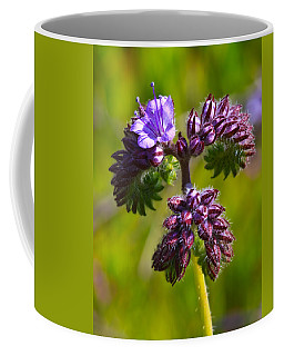 Coffee Mug featuring the photograph Wildflower by Beth Sargent
