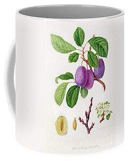 Wilmot's Early Violet Plum Coffee Mug