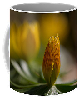 Winter Aconite Coffee Mug