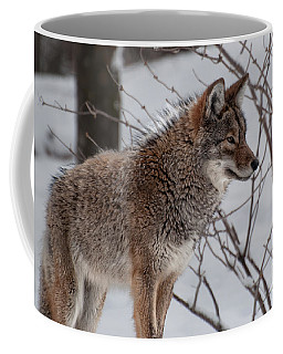 Coffee Mug featuring the photograph Winter Coyote by Bianca Nadeau