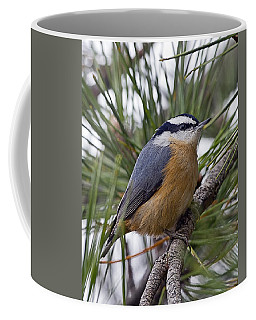 Winter Visitor - Red Breasted Nuthatch Coffee Mug