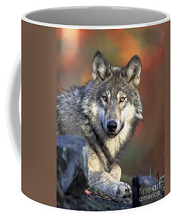 Coffee Mug featuring the photograph Wolf Predator Canidae Canis Lupus Hunter by Paul Fearn
