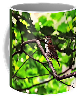 Wood Thrush Singing Coffee Mug