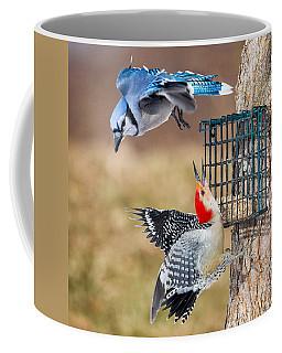Woodpeckers And Blue Jays Square Coffee Mug