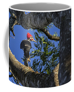 Woody Woodpecker Coffee Mug by David Gleeson