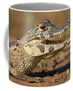 Yacare Caiman Caiman Crocodilus Yacare Coffee Mug