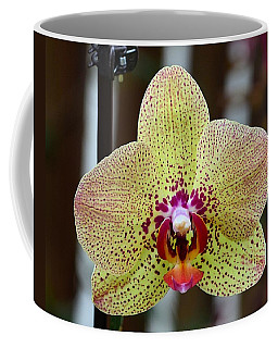 Yellow And Maroon Orchid Coffee Mug