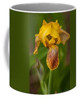 Yellow Bearded Iris Coffee Mug