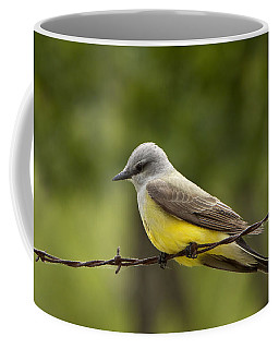 Yellow-bellied Fence-sitter Coffee Mug