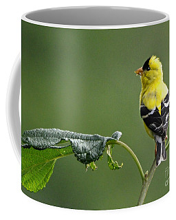 Coffee Mug featuring the photograph Yellow Finch by Nava Thompson