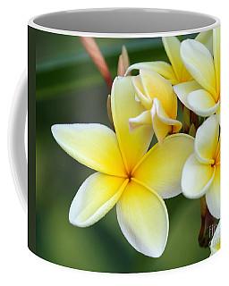 Yellow Frangipani Flowers Coffee Mug