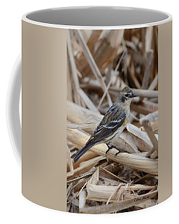 Coffee Mug featuring the photograph Yellow-rumped Warbler by Debra Martz