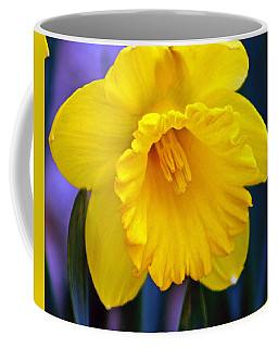 Coffee Mug featuring the photograph Yellow Spring Daffodil by Kay Novy