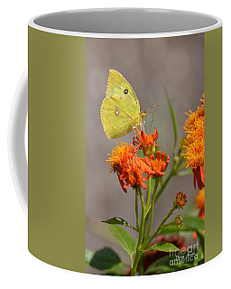 Coffee Mug featuring the photograph Yellow Sulphur Butterfly by Debra Martz