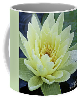 Yellow Water Lily Nymphaea Coffee Mug