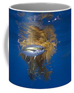 Yellowfin Tuna And Kelp Nine-mile Bank Coffee Mug