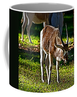 Youngster Addax Coffee Mug by Miroslava Jurcik