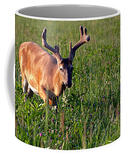 Coffee Mug featuring the photograph Young Buck by Eleanor Abramson