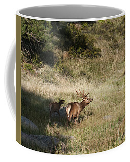 Young Bull Elk Coffee Mug