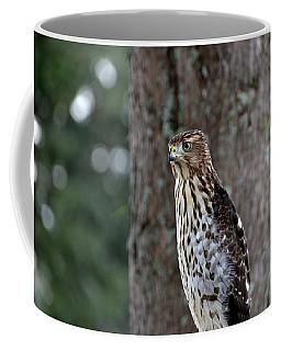 Young Coopers Hawk Coffee Mug