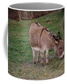 Young Donkey Eating Coffee Mug