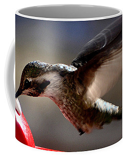 Coffee Mug featuring the photograph Young Hummingbird Male Anna by Jay Milo