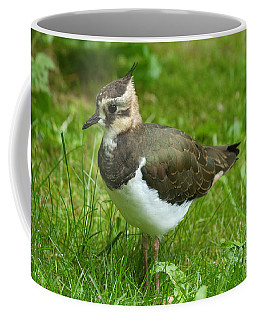 Young Lapwing Coffee Mug
