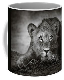 Young Lion Portrait Coffee Mug