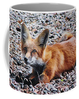 Coffee Mug featuring the photograph Young Red Fox Watches Squirrel by Diane Alexander