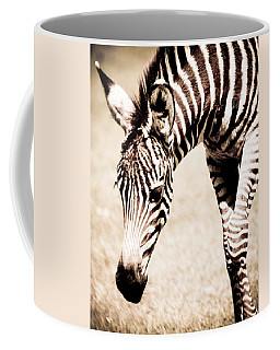 Zebra Foal Sepia Tones Coffee Mug