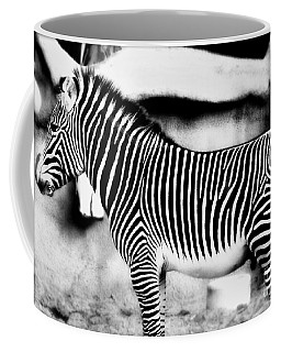 Coffee Mug featuring the photograph Zebra by Kristine Merc