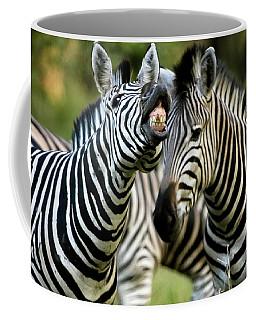 Zebra Showing Its Teeth, Equus Quagga Coffee Mug