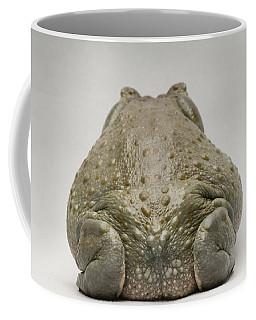 A Colorado River Toad Bufo Alvarius Coffee Mug
