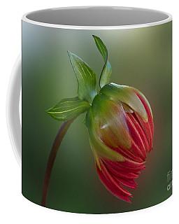 Before The Blossom Coffee Mug