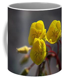 Coffee Mug featuring the photograph Desert Evening Primrose by Joe Schofield