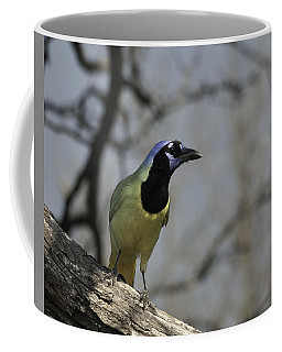 Coffee Mug featuring the photograph Green Jay by Betty Depee