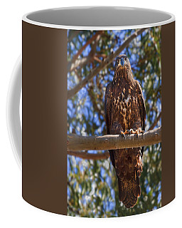 Coffee Mug featuring the photograph Immature Bald Eagle by Beth Sargent