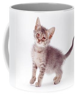 Kitten With Severe Conjunctivitis Coffee Mug