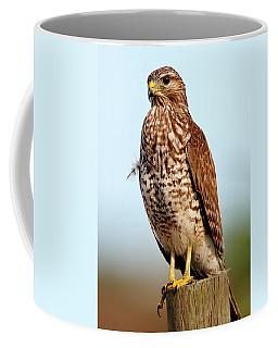 Portrait Of A Red Shouldered Hawk Coffee Mug