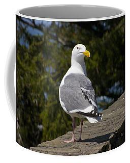 Coffee Mug featuring the photograph Seagull by David Gleeson