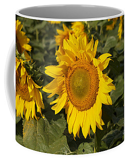 Coffee Mug featuring the photograph Sun Flower by William Norton