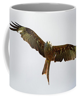 Coffee Mug featuring the photograph Red Kite In Flight by Maria Gaellman