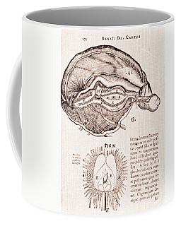 Pineal Gland Coffee Mugs   Fine Art America