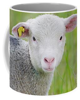 Young Sheep Coffee Mug