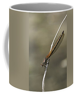 Coffee Mug featuring the photograph Red Bluet by Betty Depee