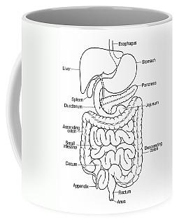 Illustration Of Abdomen Coffee Mug