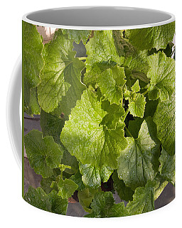 A Green Leafy Vegetable Plant After Watering In Bright Sunrise Coffee Mug by Ashish Agarwal