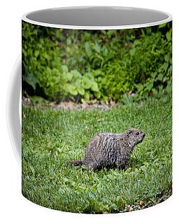 A Groundhog Marmota Monax Enjoys A Meal Coffee Mug